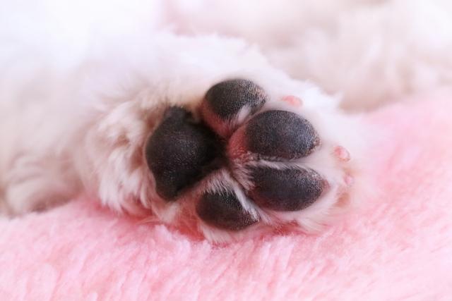 ホホバオイル 犬