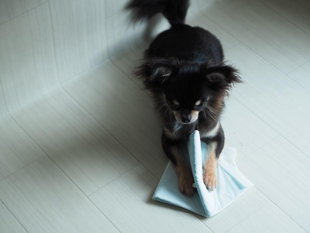 散らかす犬