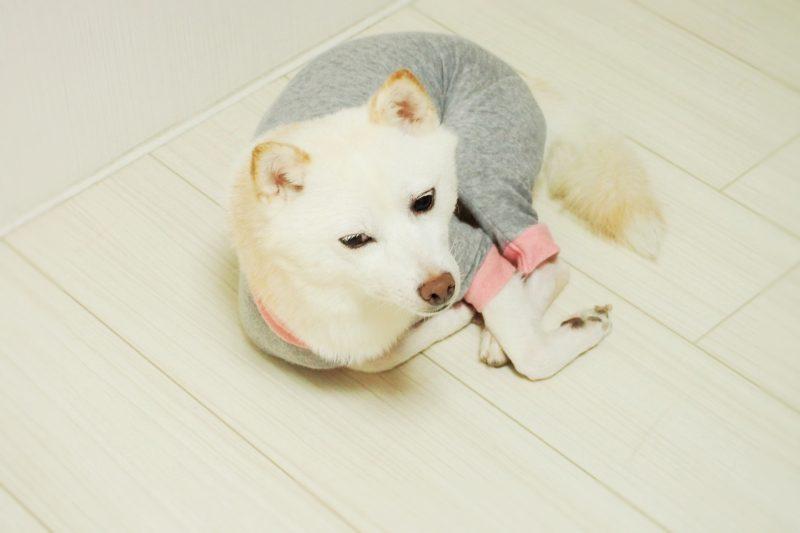シニア犬1
