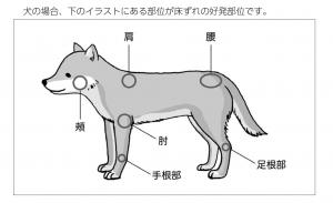 犬の床ずれが起こりやすい場所