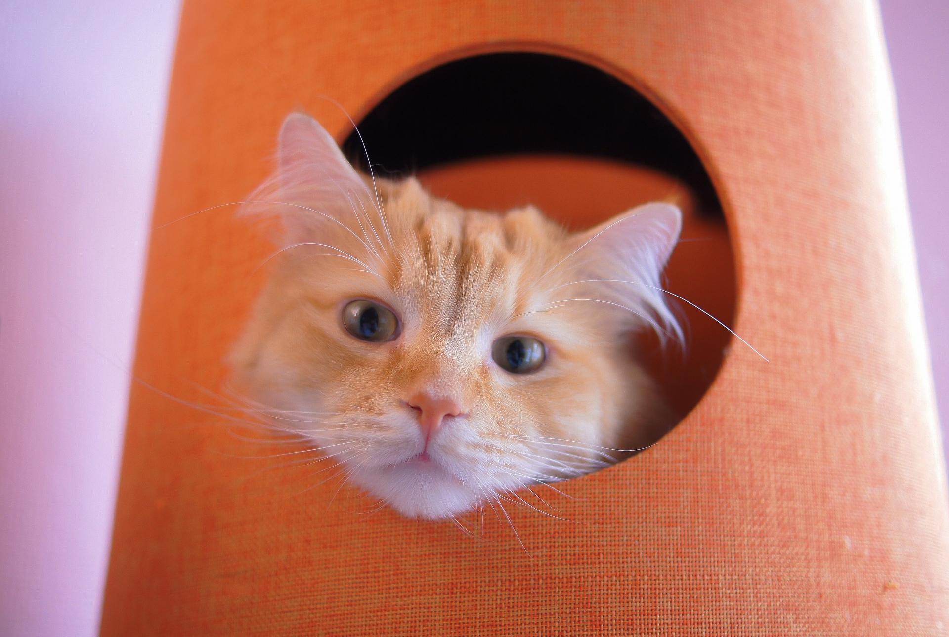 猫_穴から顔出し