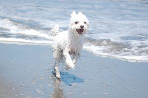 夏の日の犬2