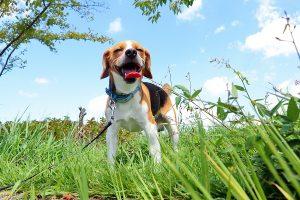 夏の日の犬1