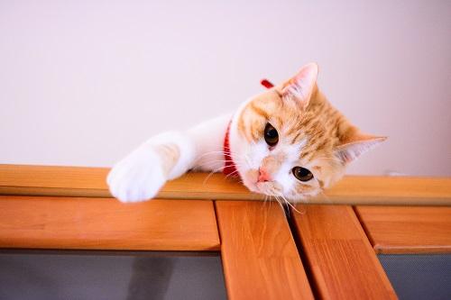 天井からのぞく猫